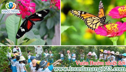 Đến thăm vườn Bướm nhiệt đới tại Lifestyle Resort Đà Nẵng