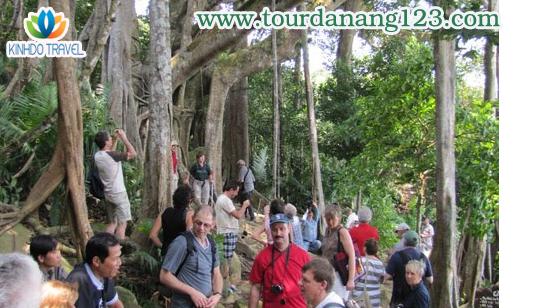Cây đa Sơn Trà địa điểm hút khách tham quan