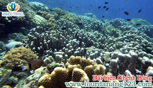 Du lịch Đà Nẵng lặn ngắm bãi biển Ghềnh Bàng