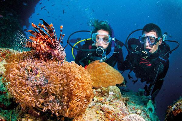 Trong tour Đà Nẵng Cù Lao Chàm có thể bạn sẽ được lặn ngắm san hô dưới đáy biển