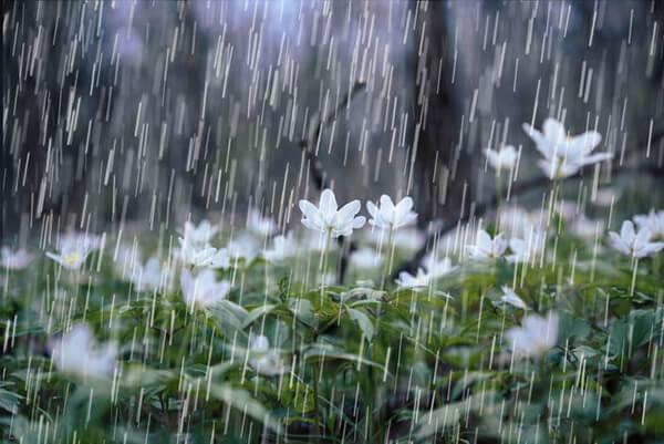 Những cơn mưa sẽ xuất hiện bất chợt thế nên bạn nhớ mang theo áo khoác mỏng và thuốc cảm nhéNhững cơn mưa sẽ xuất hiện bất chợt thế nên bạn nhớ mang theo áo khoác mỏng và thuốc cảm nhé